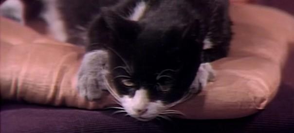 379 dark shadows joshua cat header