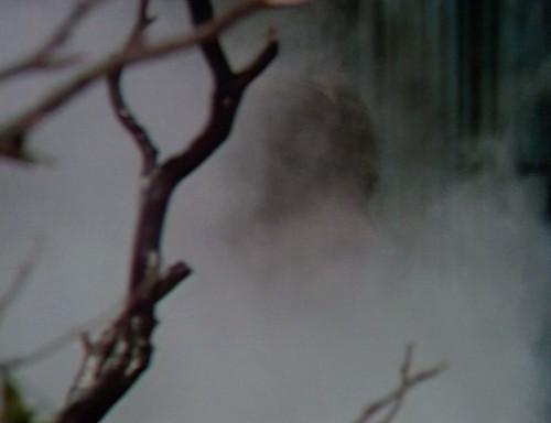 413 dark shadows fog