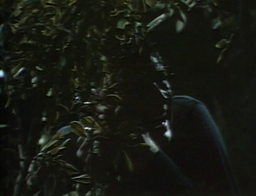 501 dark shadows adam lost