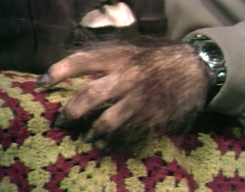 651 dark shadows chris werewolf hand