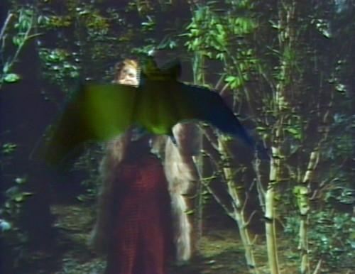 771 dark shadows pansy bat