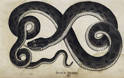 782 dark shadows black snake