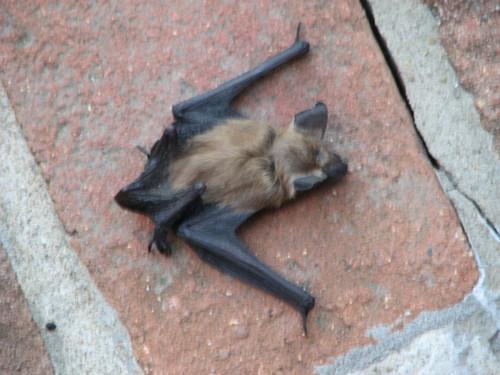 782 dead bat
