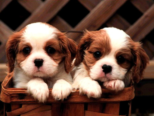 782 more puppies