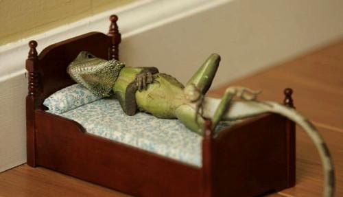 946-lizard-bed