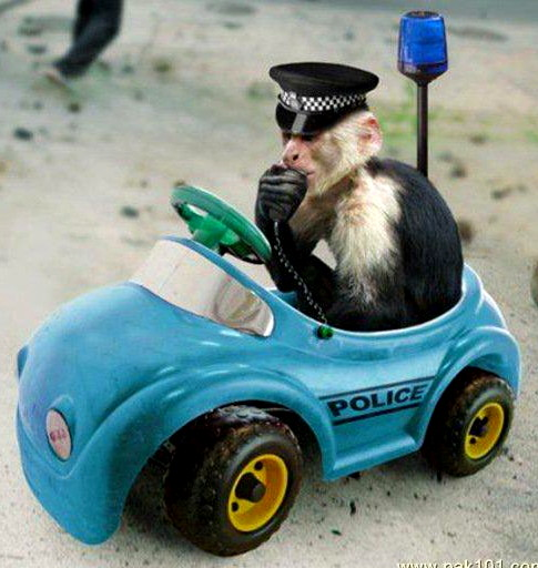 985-monkey-cops